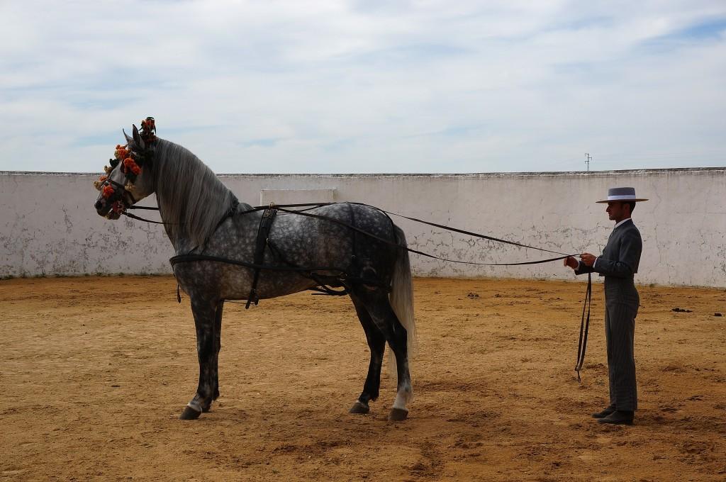 Spanish Horses - Cortijo de la Sierra