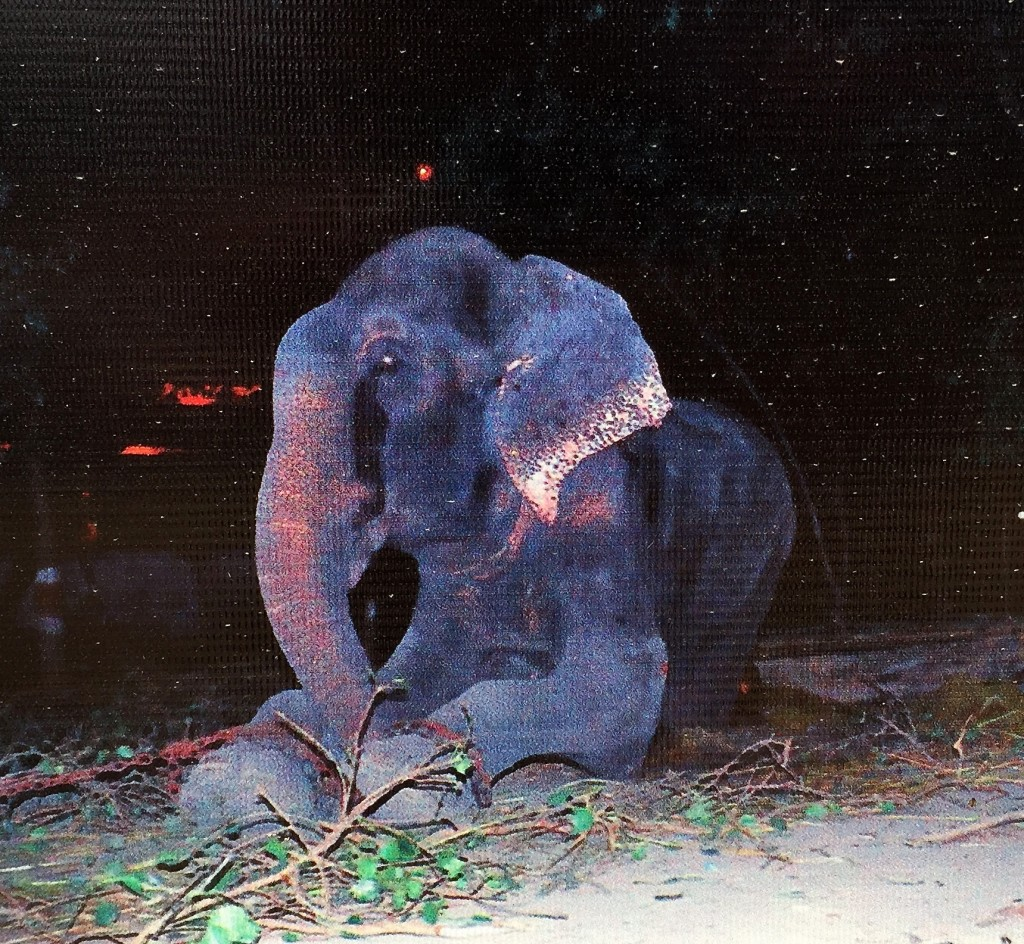 Kartick, the co-founder of Wildlife S.O.S, cut Rajus chains in a night raid. Above is the photo of Raju weeping after his release. He arrived at the center in July, 2014, and is still suffering from the wounds he suffered over the course of his 50-year captivity. His right left leg is vastly swollen still and so painful he walks gingerly on it, but Kartick feels he will recover over the next year and a half