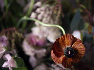 brown-ranunculus
